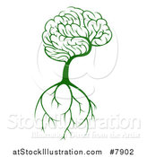 Vector Illustration of a Green Knowledge Brain Canopied Tree with Roots by AtStockIllustration