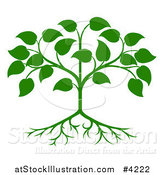 Vector Illustration of a Green Seedling Tree with Leaves and Roots by AtStockIllustration