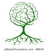 Vector Illustration of a Green Tree with a Brain Canopy and Roots by AtStockIllustration