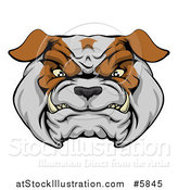 Vector Illustration of a Growling Aggressive Bulldog Face by AtStockIllustration