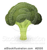Vector Illustration of a Head of Organic Broccoli by AtStockIllustration