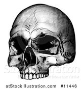 Vector Illustration of a Human Skull, Black and White Vintage Etched Style by AtStockIllustration