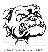 Vector Illustration of a Lineart Angry Bulldog Face and Spiked Collar by AtStockIllustration