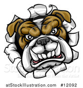 Vector Illustration of a Mad Bulldog Breaking Through a Wall by AtStockIllustration