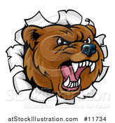 Vector Illustration of a Mad Grizzly Bear Mascot Head Breaking Through a Wall by AtStockIllustration