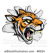 Vector Illustration of a Mad Tiger Mascot Breaking Through a Wall by AtStockIllustration