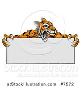 Vector Illustration of a Roaring Aggressive Tiger Sports Mascot Holding a Blank Wide Sign by AtStockIllustration