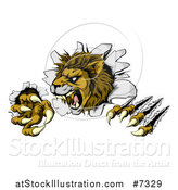 Vector Illustration of a Roaring Lion Mascot Slashing Through a Wall by AtStockIllustration