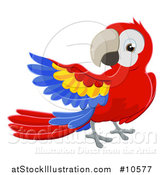 Vector Illustration of a Scarlet Macaw Parrot Presenting by AtStockIllustration