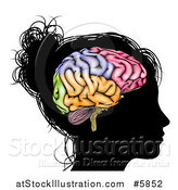 Vector Illustration of a Silhouetted Woman's Head with a Visual Brain by AtStockIllustration