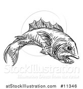 Vector Illustration of a Sketched Black and White Fish by AtStockIllustration