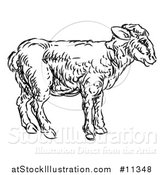 Vector Illustration of a Sketched Black and White Lamb by AtStockIllustration