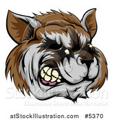 Vector Illustration of a Snarling Aggressive Raccoon Mascot Head by AtStockIllustration