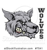 Vector Illustration of a Snarling Gray Wolf Mascot Head and Text by AtStockIllustration