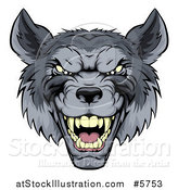 Vector Illustration of a Snarling Gray Wolf Mascot Head by AtStockIllustration