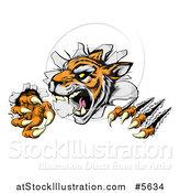 Vector Illustration of a Snarling Tiger Mascot Breaking Through a Wall by AtStockIllustration