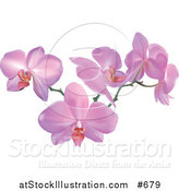 Vector Illustration of a Stem of Pink Orchid Flowers by AtStockIllustration