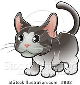 Vector Illustration of a Sweet Gray and White Tuxedo Cat with Pink Ears by AtStockIllustration