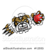 Vector Illustration of a Tough Bulldog Monster Shredding Through a Wall with a Cricket Ball in One Hand by AtStockIllustration