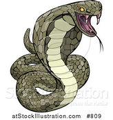 Vector Illustration of a Vemomous and Defensive Green Cobra Snake Preparing to Attack by AtStockIllustration