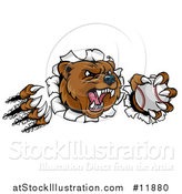 Vector Illustration of a Vicious Aggressive Bear Mascot Slashing Through a Wall with a Baseball in a Paw by AtStockIllustration