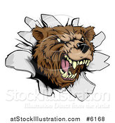 Vector Illustration of a Vicious Aggressive Roaring Bear Mascot Breaking Through a Wall by AtStockIllustration