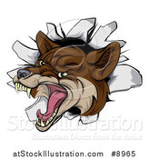 Vector Illustration of a Vicious Coyote Mascot Head Breaking Through a Wall by AtStockIllustration