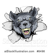 Vector Illustration of a Vicious Gray Wolf Breaking Through a Wall by AtStockIllustration
