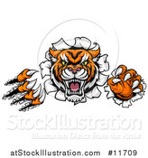 Vector Illustration of a Vicious Tiger Mascot Slashing Through a Wall by AtStockIllustration