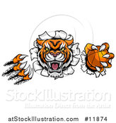 Vector Illustration of a Vicious Tiger Mascot Slashing Through a Wall with a Basketball by AtStockIllustration