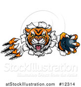 Vector Illustration of a Vicious Tiger Mascot Slashing Through a Wall with a Bowling Ball by AtStockIllustration
