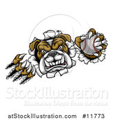 Vector Illustration of a Vicious Tough Bulldog Monster Shredding Through a Wall with a Baseball in One Hand by AtStockIllustration