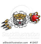 Vector Illustration of a Vicious Wildcat Mascot Shredding Through a Wall with a Cricket Ball by AtStockIllustration