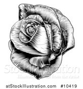 Vector Illustration of a Vintage Black and White Engraved or Woodcut Blooming Rose by AtStockIllustration