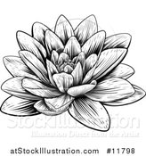 Vector Illustration of a Vintage Black and White Engraved or Woodcut Blooming Waterlily Lotus Flower by AtStockIllustration