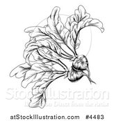 Vector Illustration of a Vintage Woodcut Styled Beet in Black and White by AtStockIllustration