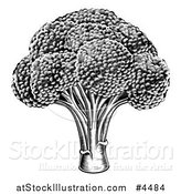 Vector Illustration of a Vintage Woodcut Styled Broccoli in Black and White by AtStockIllustration