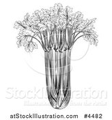 Vector Illustration of a Vintage Woodcut Styled Bunch of Celery in Black and White by AtStockIllustration