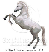 Vector Illustration of a White Horse Standing on Its Hind Legs While Rearing up in Defense by AtStockIllustration