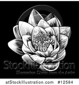 Vector Illustration of a Woodcut Blooming Waterlily Lotus Flower on Black by AtStockIllustration