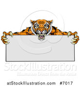 Vector Illustration of an Aggressive Tiger Sports Mascot Holding a Blank Wide Sign by AtStockIllustration