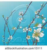 Vector Illustration of Background of Branches with Spring Blossoms over Blue Sky by AtStockIllustration