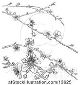 Vector Illustration of Black and White Background of Branches with Spring Blossoms by AtStockIllustration