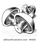 Vector Illustration of Black and White Button Mushrooms by AtStockIllustration