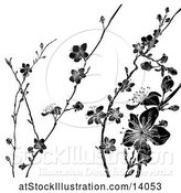 Vector Illustration of Black and White Cherry Blossom Branches Background by AtStockIllustration