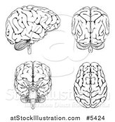 Vector Illustration of Black and White Human Brains at Different Angles by AtStockIllustration