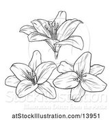 Vector Illustration of Black and White Lily Flowers by AtStockIllustration