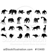 Vector Illustration of Black Silhouetted African Animals, Elephants, Rhinos, Lions and Giraffes by AtStockIllustration