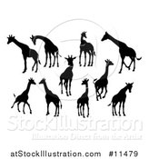 Vector Illustration of Black Silhouetted Giraffes by AtStockIllustration