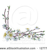 Vector Illustration of Branches with White Spring Blossoms by AtStockIllustration